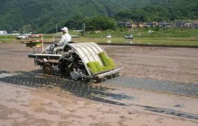 紙マルチ田植えによる雑草の抑制